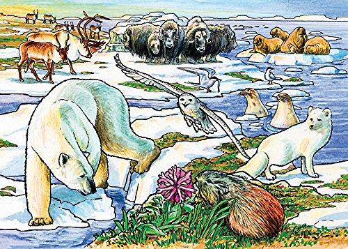 Cobble Hill Arctic Adventure 35 Piece Jigsaw Puzzle