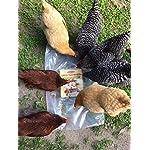 11lbs Bulk Non-GMO Dried Mealworms for Reptile, Tortoise ; Amphibian,Lizard ;Wild Birds; Chichens; Duck etc 17