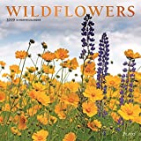 Wildflowers 2019 12 x 12 Inch Monthly Square Wall Calendar with Foil Stamped Cover by Plato, Flower Outdoor Plant
