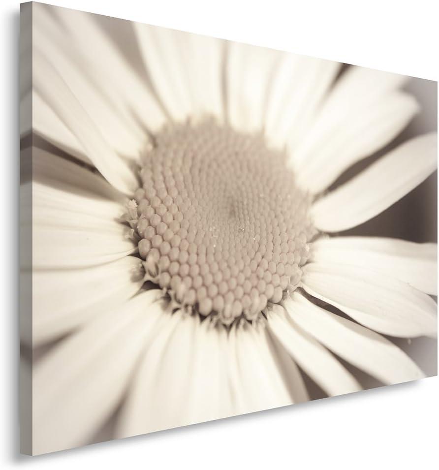 Feeby Frames, Cuadro en lienzo, Cuadro impresión, Cuadro decoración, Canvas de una pieza, 70x100 cm, FLOR, FLOR GRANDE, BLANCA, BLANCO, BEIGE