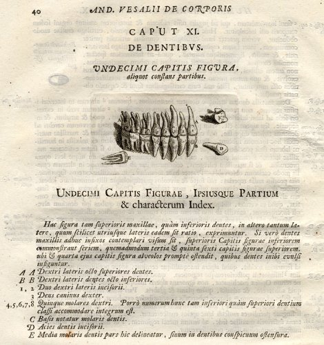 Antique Medical Print-TEETH-Vesalius-1725