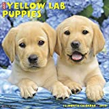 Just Yellow Lab Puppies 2019 Wall Calendar (Dog Breed Calendar)