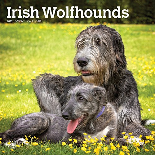 Top 4 best irish wolfhound wall calendar 2019