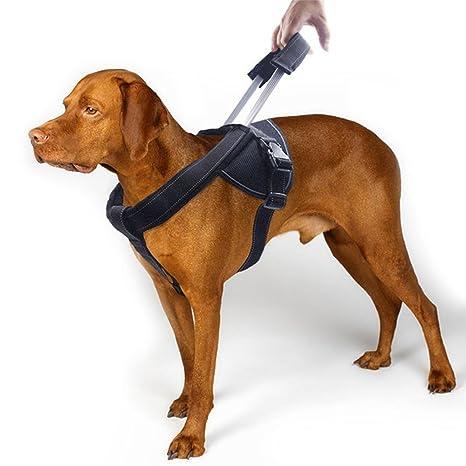 CERBERUS Chaleco De Arnés De Perro Ajustable Adecuado para Perros ...