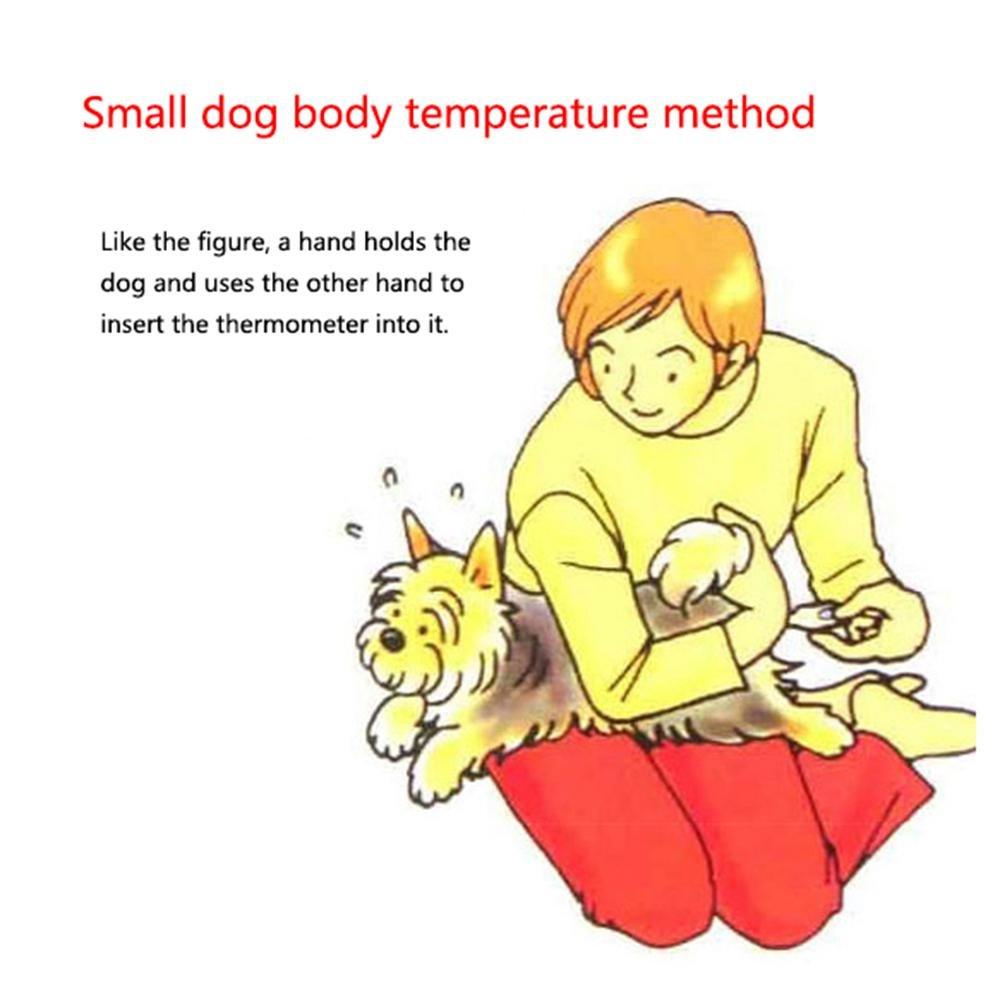 FOONEE Termómetro para Perro, Gato/Perro, termómetro Digital para Mascotas, para Cachorro, Gato, Conejo (Blanco): Amazon.es: Hogar