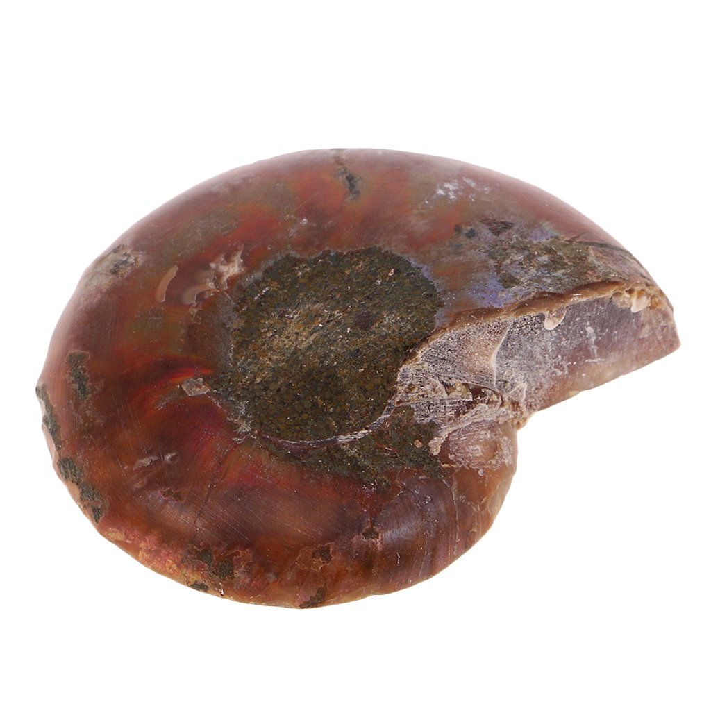 MagiDeal Natural Ammonite Shell Gemstone Crafts for DIY Pendant Necklace Bracelet Jewelry Making Decoration Gift STK0161000717