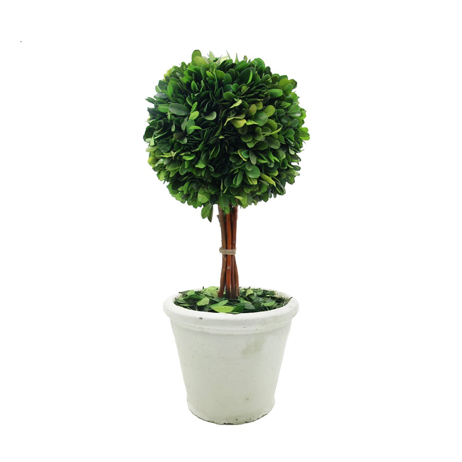 DRWARE Preserved Boxwood Single Ball Topiary in Pot -6''X14.2''