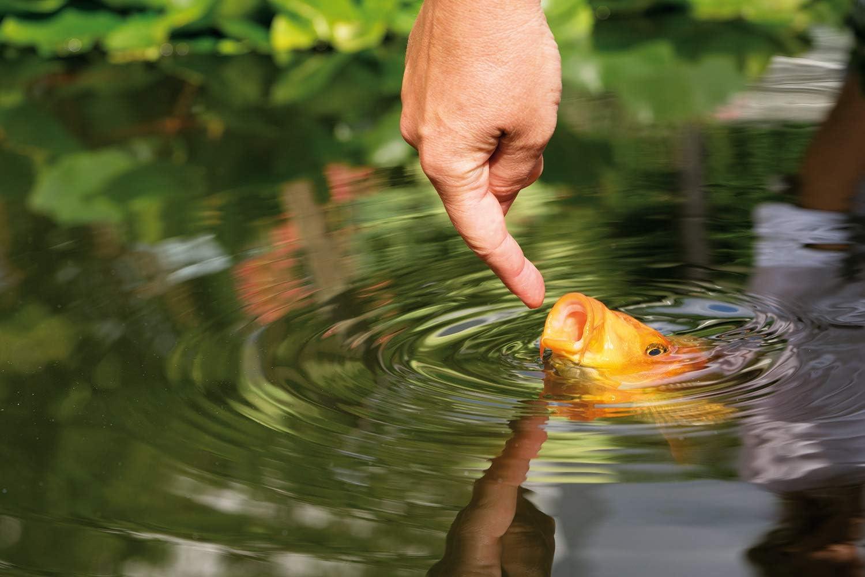 Fr/ühjahr bis Herbst Gold-/& Teich-Fischfutter AL-KO-TE 2mm Schwimmende Pellets 3-Jahreszeitenfutter f/ür kleine Kois