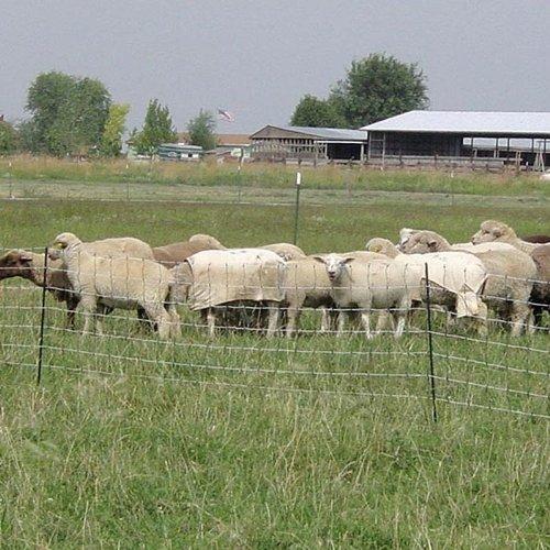 Powerfields P-75-W Electric 32-Inch Sheep Fence-Netting,...