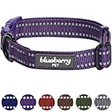 Blueberry Pet 6 Colors 3M Reflective Classic Fashion Color Dog Collar, Violet, Small, Neck 12''-16'', Adjustable Collars for Dogs