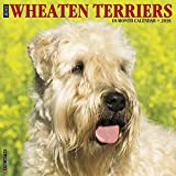 Just Wheaton Terriers 2018 Wall Calendar (Dog Breed Calendar)