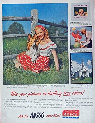 Film Ansco Color (Ansco Color Film, 40's Print Ad. full Page Color Illustration (girl and her dog) Original Vintage, Rare 1948 Life Magazine Art)