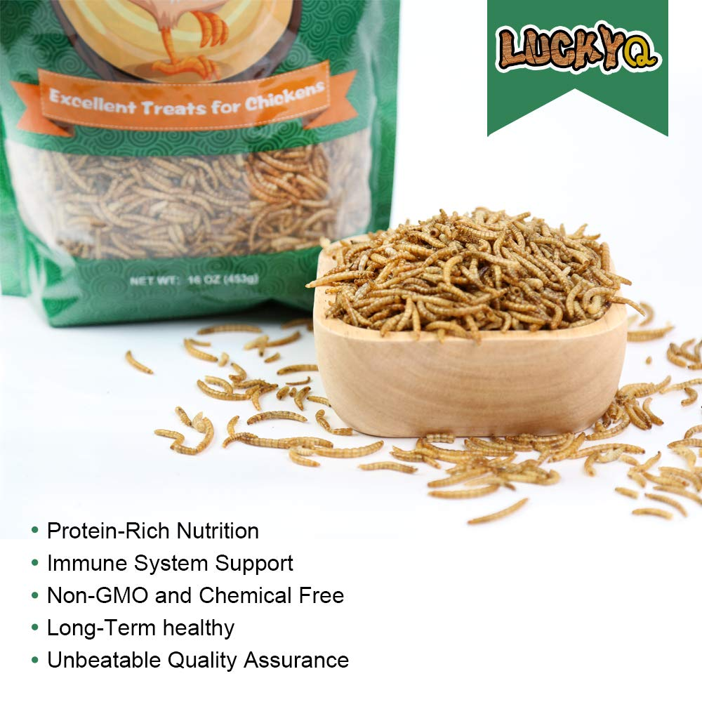 Turtles Hamsters and Hedgehogs Fish LUCKYQ High-Protein Dried Mealworms 1Lb for Birds Chickens Non-GMO and Chemical Free All Natural Animal Feed