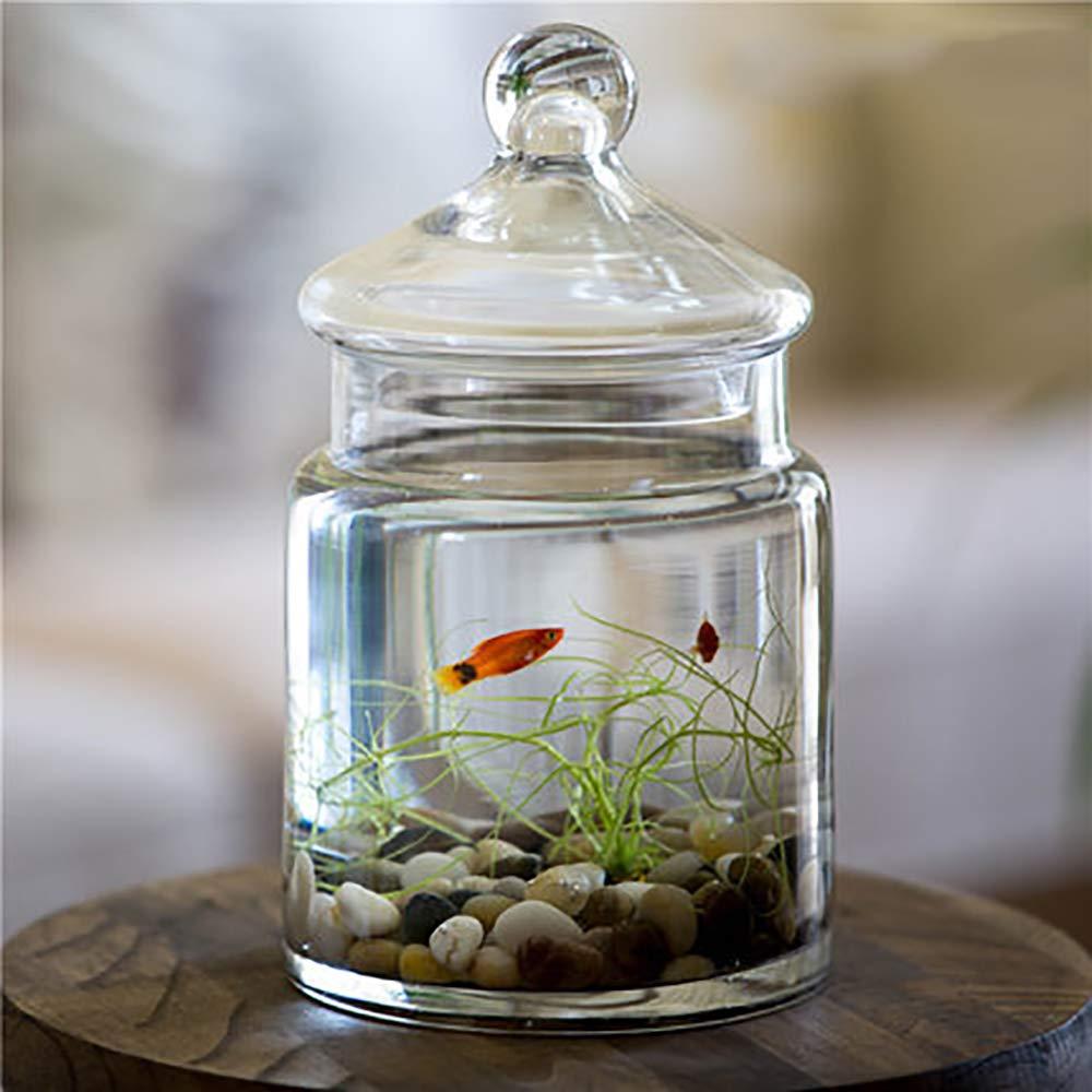 Cobblestone Set REWQ Aquarium, glass with lid Living room small redten table aquariumWhite Green set