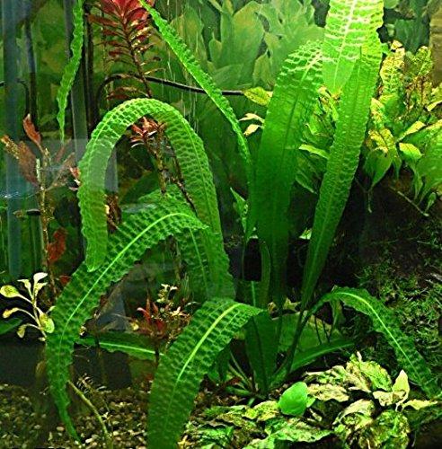 Large Aquarium Plant - 8