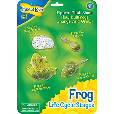 Insect Lore Frog Life Cycle Stages: Industrial & Scientific