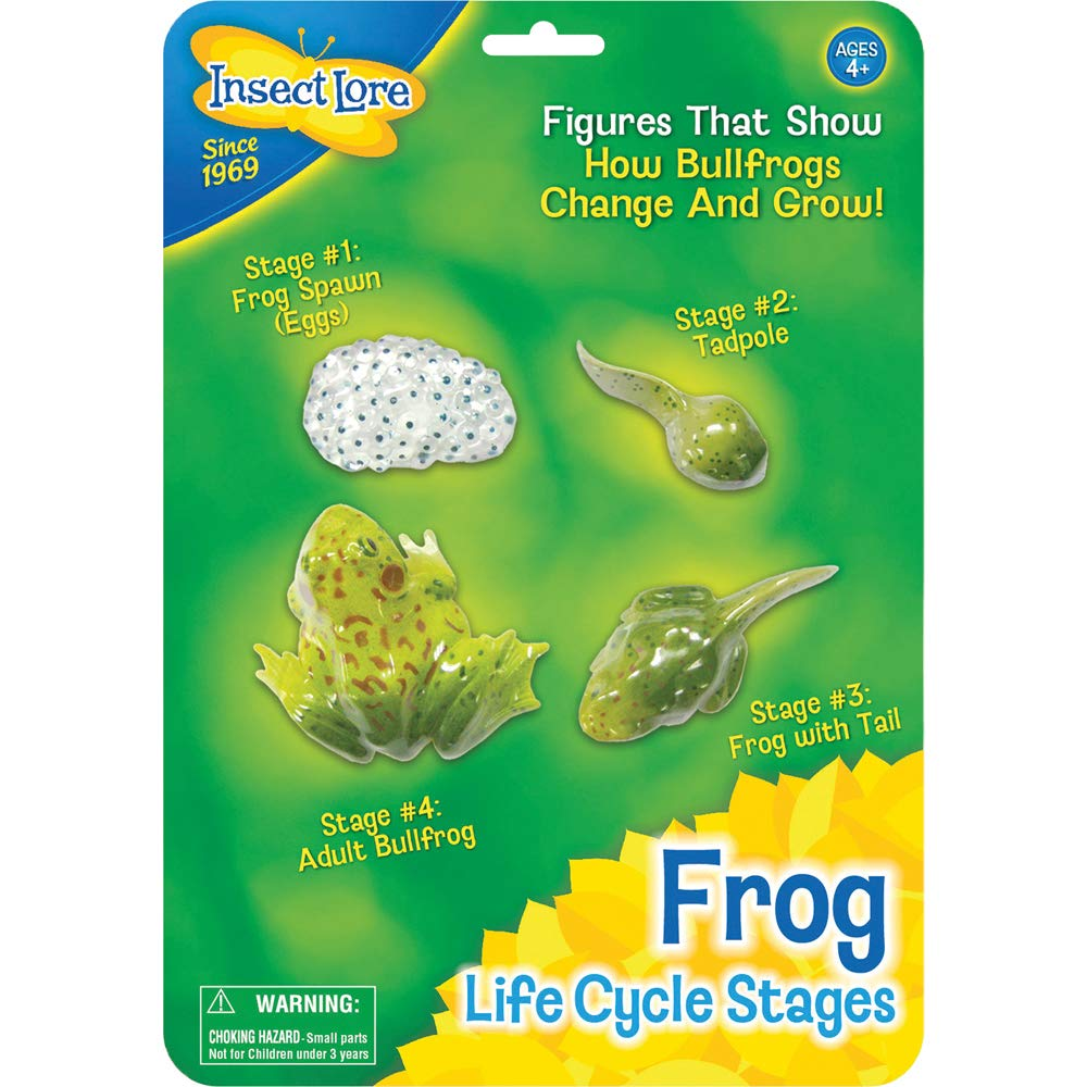 Insect Lore Frog Life Cycle Stages