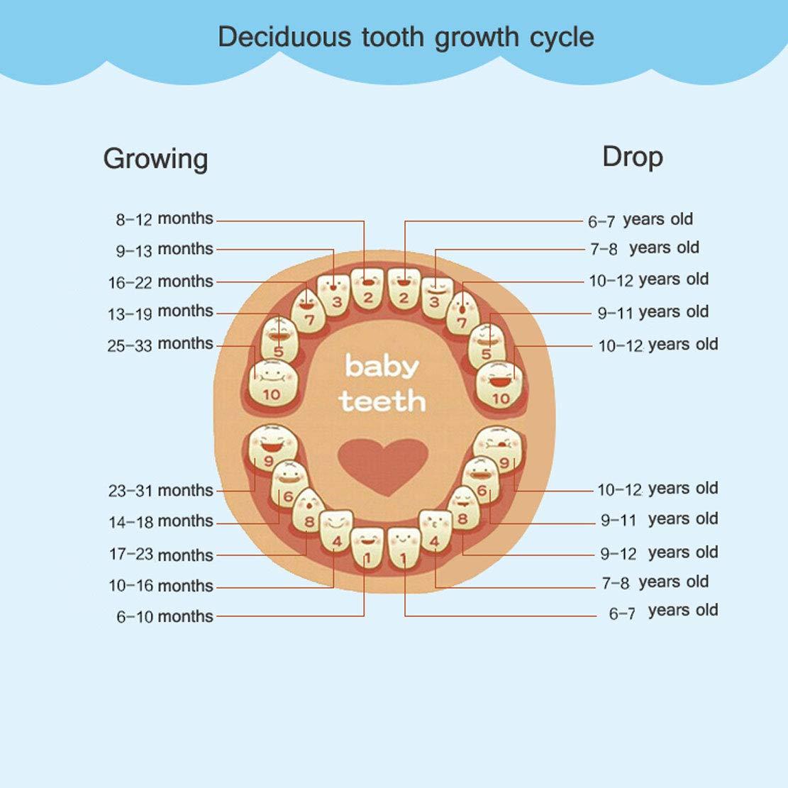 MTGYF Baby Teeth Box Girl Boy Teeth Collection Storage Box Children Umbilical Cord Fetal Hair Storage Box Milk Tooth House Change Tooth Pink Memorial Box