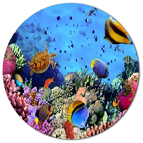 - Designart Coral Colony on Reef Egypt Animal Metal Artwork - Disc of 23 inch 23'' H x 23'' W x 1'' D 1P Pink/Blue