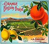 Redlands Orange Blossom Brand Orange Citrus Fruit Crate Box Label Art Print