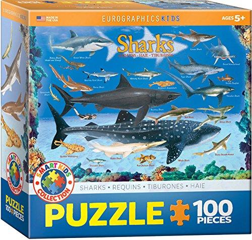 100 Shark - 1