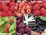 Bulk 5 Raspberry Seeds Survival Seeds 900 Seeds Upc 646263360972 + 6 Plant Markers