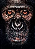 James and Other Apes, James Mollison, 0954689437