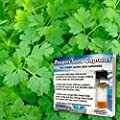 Chervil Seeds (Anthriscus cerefolium) 50+ Rare Non-GMO Heirloom Culinary Herb Seeds Packed in FROZEN SEED CAPSULES for the Gardener & Rare Seeds Collector - Plant Seeds Now or Save Seeds for Years!