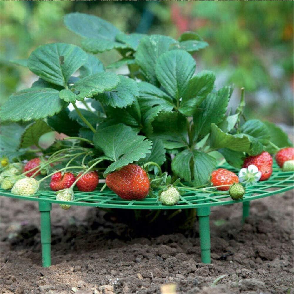 5 Unidades Strawberry Plant Support Squash Cradle Plant apoya la protecci/ón de Fresas y Mantiene la Limpieza de Fresas en posici/ón Vertical. Wankd Rallador de Fresas