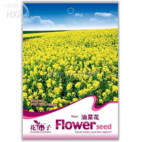 ChinaMarket Canola Flower Seeds Rapeseed Edible Rape Flower Seeds, 150 seeds, aromatic ornamental patio potted plants light up garden