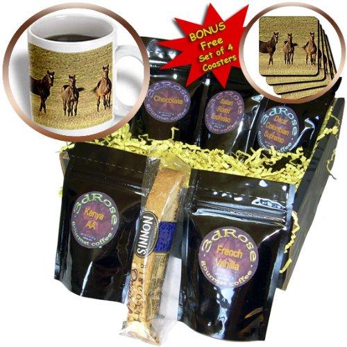 Danita Delimont - Horses - Thoroughbred horses, Lexington, Kentucky - US18 AJE0406 - Adam Jones - Coffee Gift Baskets - Coffee Gift Basket (cgb_90398_1)