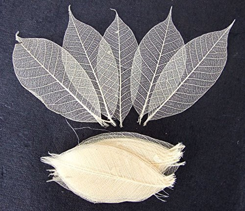 (100 Pcs. Skeleton Natural Rubber Leaves Artificial Leaves Craft Card Scrapbook Diy Handmade Embellishment Decoration Art)
