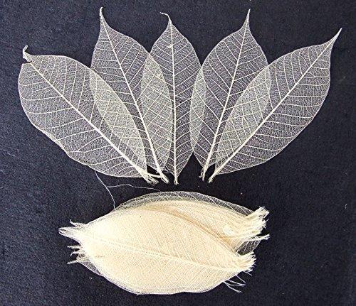 100 Pcs. Skeleton Natural Rubber Leaves Artificial Leaves Craft Card Scrapbook Diy Handmade Embellishment Decoration Art