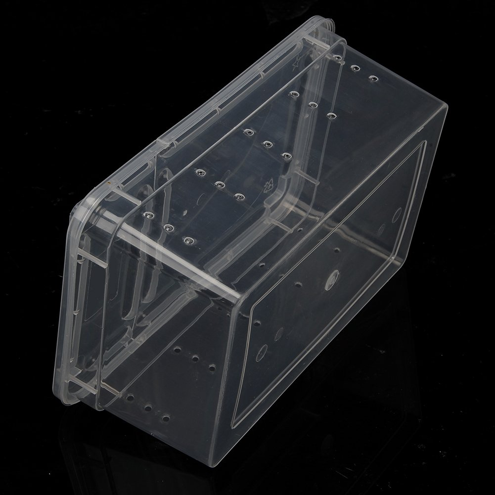 Amazon.com : OSHIDE Acrylic Transparent Reptiles Terrarium Container for Lizard Chameleon Spider Snake or Other Reptiles & Amphibians : Pet Supplies