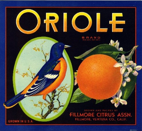 - A SLICE IN TIME Fillmore, Ventura County Oriole Bird Orange Citrus Fruit Crate Box Label Art Print