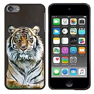 Jordan Colourful Shop - Tiger Stripes Fur Grey Nature Animal Zoo For Apple iPod Touch 6 6th Generation Personalizado negro cubierta de la caja de pl????stico
