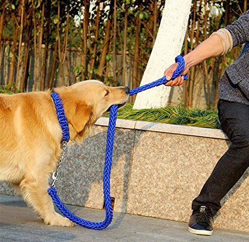 LA VIE Collar Ajustable de Nylon Incluye 120CM Correa de Perro Cuerda de Nylon Trenzado Mosquet/ón Fuerte Accesorios de Adiestramiento para Mascotas Perros M P/úrpura y Azul