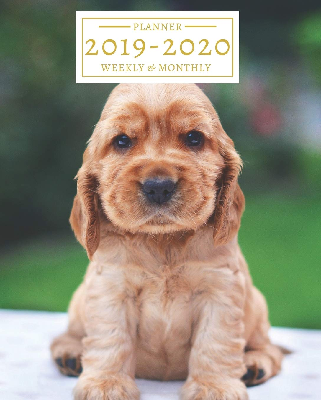Cocker Spaniel Puppies Calendar 2019