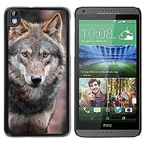 TopCaseStore / la caja del caucho duro de la cubierta de protección de la piel - Wolf Wild Dog Brown Forest Fairytale Eyes - HTC DESIRE 816