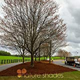 Nature Shades 16oz Pine Straw Colorant Southern