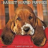 Just Basset Hound Puppies 2017 Wall Calendar (Dog Breed Calendars)