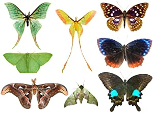 Wallmonkeys Butterfly Moth Collection Wall Decal Peel and Stick Graphic (12 in W x 9 in H) WM265798