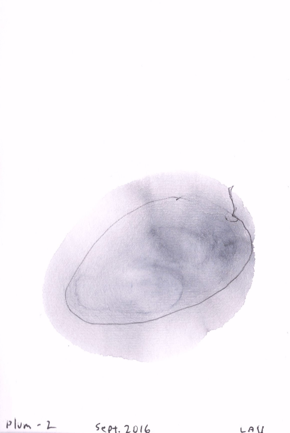plum 1 | sumi-e ink paintings by Northwest artist
