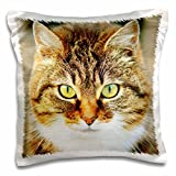 3D Rose Cute Image Domestic Cat People Animal pet Kitty Pillow Case, 16'' x 16''