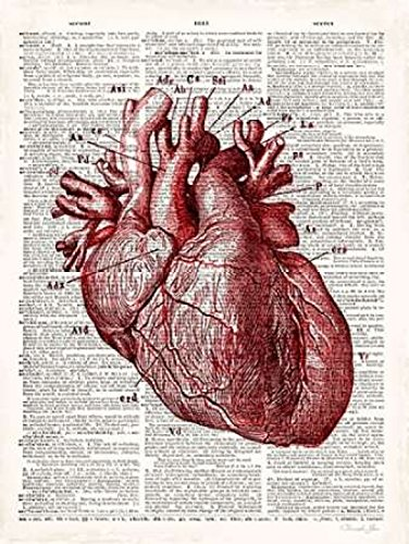 Vintage Anatomy Heart Poster Print by Christopher James