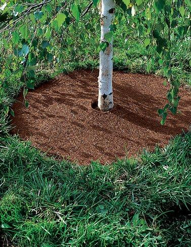 Coco Fiber Tree Rings set product image