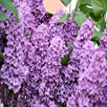 Lilac Fragrance Oil - 4 Oz - For Candle & Soap Making By Virginia Candle Supply - Free S&h In Usa