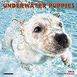 2016 Underwater Puppies Mini Wall Calendar