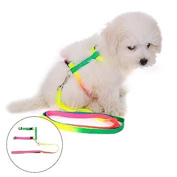 yunt, multicolor correa y arnés de poliéster para cachorro gato ...