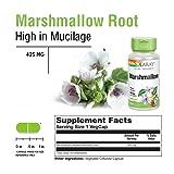 Solaray Marshmallow Root 480 mg | Healthy